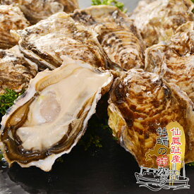 送料無料 北海道仙鳳趾産 殻付き 生牡蠣 10個 Lサイズ