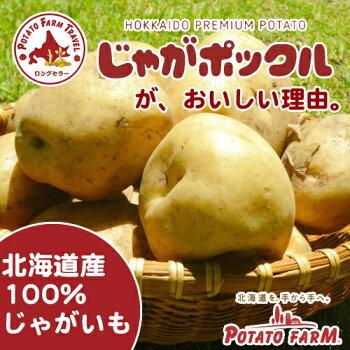 カルビーじゃがポックル10袋入北海道土産お菓子人気