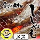 【北海道 釧路笹谷】釧路 釧之助 干しししゃも(メス) 10尾