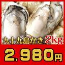 【送料無料】UV殺菌済【安心安全】生食可《九十九島産》殻付き生牡蠣2kg/開け方ガイド付リピーター向け:ナイフ・軍手・レモンなし旨…