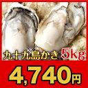 《九十九島産》殻付き牡蠣5kg/生食可開け方ガイド付【送料無料】一年モノ!パーティーができる大ボリューム!北海道・沖縄は送料850円かかります
