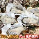 《九十九島産》殻付き牡蠣5kg/生食可開け方ガイド付【送料無料】一年モノ!パーティーができる大ボリューム!北海道…
