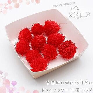千日紅に似たトゲトゲのドライフラワー10個[レッド]/ハーバリウムやアロマワックスバー/ボタニカルサシェにも/花材