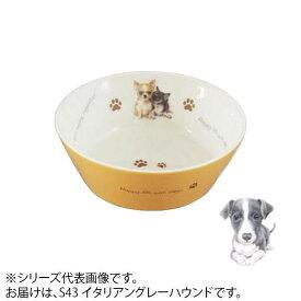 えさ皿 犬 食器わんコレ カラーフードボウル(小) イタリアングレーハウンド new-fb4-S43【送料無料】