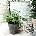 植木鉢 おしゃれ セメント フォリオソリッドL< 31cm 10号 穴あり 白 クリーム グレー ホワイト 黒 ブラック 円すい型…