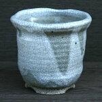 白マットウチョウラン鉢(SA120-03)
