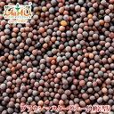 ブラウンマスタードシード 1000g/1kg 常温便,Brown Mustard Seeds,原型,マスタードシード,マスタード,ホール,芥子,か…