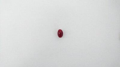 アヴ・オヴォミスティックアイビルベリールテイン30日分【カシスアスタキサンチンEPADHAアントシアニン北欧産紫外線サプリメント安心安全ブルーライト健康食品】