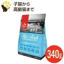 オリジン 6フィッシュ キャット 340g (正規品) 全年齢 全猫種用 キャットフード 賞味期限2021.2.19