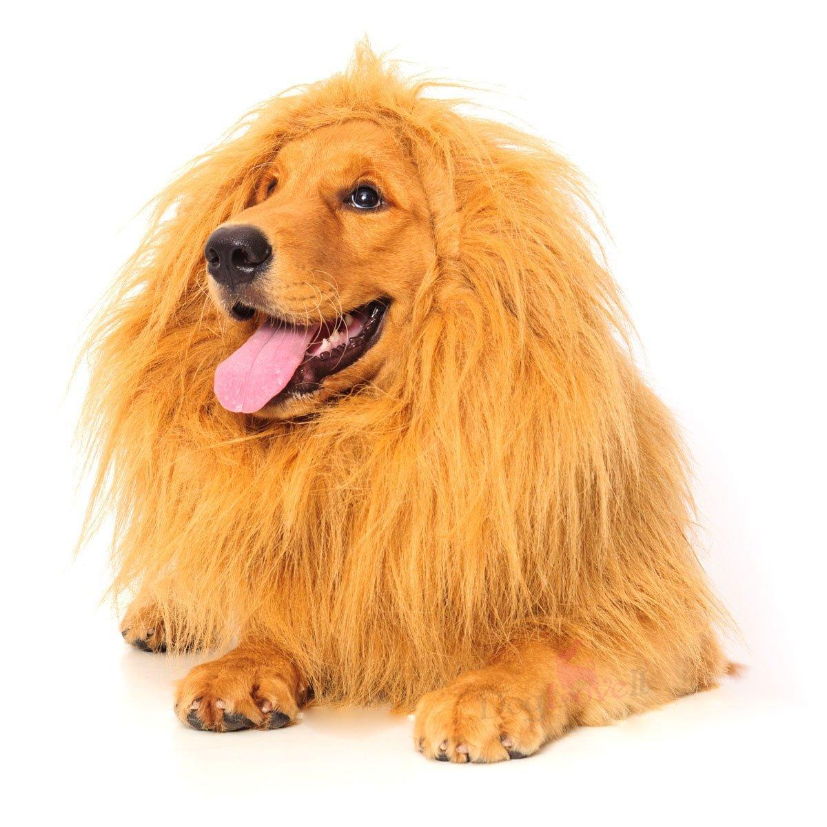 ハロウィン 犬 コスチューム コスプレ 仮装 服 動物 ペット ライオンのたてがみ 年賀状 戌年