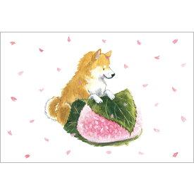 春柄しばいぬポストカード【さくら餅と柴犬】 PS-139h アクティブコーポレーションより直送 ネコポス可
