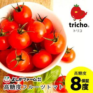 フルーツトマト 甘い 高騰度 8度 糖度保証 トマト 産地直送tricho(R)トリコ 1.5kg アイメック(R) トマト高糖度フルーツトマト よしかファームプレゼント ギフト お中元 誕生日プレゼント ADP
