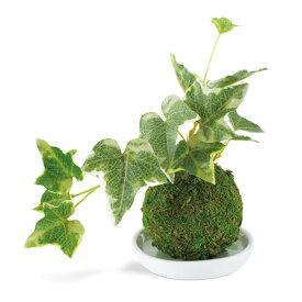 消臭アーティフィシャルグリーン 和盆栽 WA BONSAI ARTIFICIAL GREEN KH-61058 Ivy セイヨウキヅタ KISHIMA キシマ 観葉植物 CT触媒