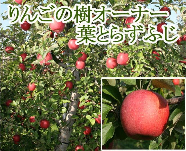 【りんご 栽培 育て方】葉とらずサンふじオーナー制度 りんごの樹のオーナー【青森 林檎】 ふじ わい化