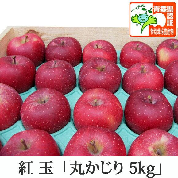送料無料 紅玉 こうぎょく 丸かじり 約5kg 県認証有り 小さめ 減農薬栽培 特別栽培農産物認証 国産 認有り 青森県産りんご