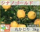 シナノゴールド 丸かじり 約3kg 県認証有り りんご リンゴ 小さめ 減農薬栽培 特別栽培農産物 青森 国産 認有り
