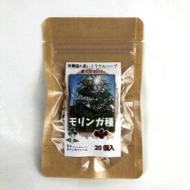 【天草モリンガ】モリンガシード モリンガの種20粒 天然ハーブMORINNGA 植えてもOK食べてもOK 推奨発芽温度20度(栄養価の高いミラクルハーブ)