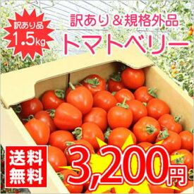 【送料無料】【規格外品】今話題のミニトマト★北海道名寄産訳ありトマトベリー【サイズ不揃い】 約1.5kg入 ※7月下旬以降収穫後のお届けとなります。【マラソン1106P02】