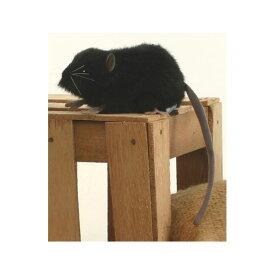 HANSA 黒ネズミ27 L27(cm) 5578 ぬいぐるみ ハンサ クリスマス 誕生日 プレゼント 動物 犬 猫 鳥 うさぎ ペンギン アニマル 置物 人形 フィギュア KOESEN ケーセン カロラータ 大きい マスコット 実物大 大型