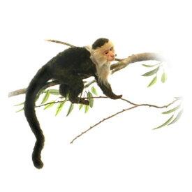 HANSA オマキザル20 H20(cm) 5851 ぬいぐるみ ハンサ クリスマス 誕生日 プレゼント 動物 犬 猫 鳥 うさぎ ペンギン アニマル 置物 人形 フィギュア KOESEN ケーセン カロラータ 大きい マスコット 実物大 大型