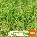 芝生 姫高麗芝 10平米【普通便】【送料無料】(ただし 北海道 / 沖縄 / 離島 を除く)