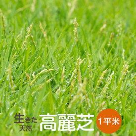 芝生 高麗芝 1平米【普通便】【送料無料】(ただし 北海道 / 沖縄 / 離島 を除く)