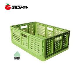 折りたたみコンテナ 薄緑色 10個セット 安全興業【取寄商品】