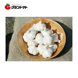 ホワイト六片ニンニク種子 1kg Mサイズ(約18個)【青森県産】