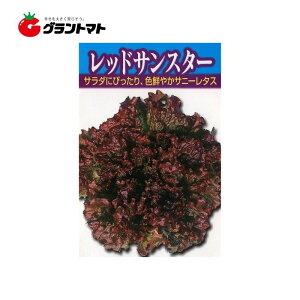 レッドサンスター 小袋 サニーレタス種子【ゆうパケット可】