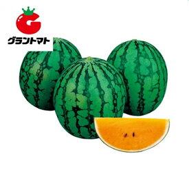 サマーオレンジベビー西瓜 200粒 野菜種子 スイカ【取寄商品】