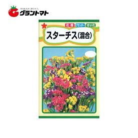スターチス(混合) 0.3ml 花種子 小袋 トーホク【取寄商品】【ゆうパケット可】