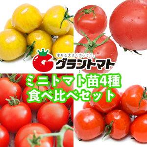 【送料無料】ミニトマト苗4種 食べ比べセット 10.5cmポット 【生産農場直送】
