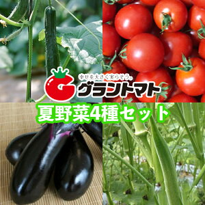 【送料無料】夏野菜苗4種セット 10.5cmポット【生産農場直送】