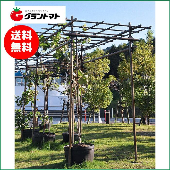 フルーツパーゴラDX 果樹用棚支柱セット 【メーカー直送】