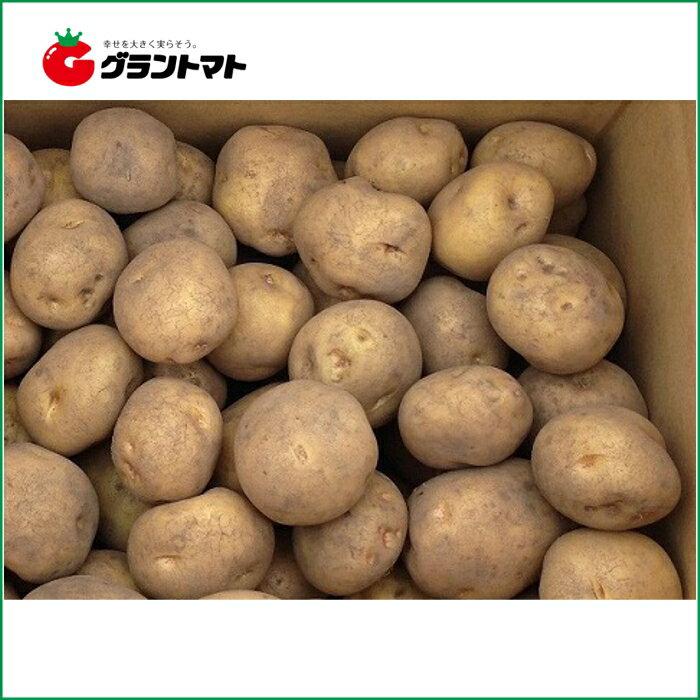 キタアカリ(北あかり)10kg箱 北海道産 じゃがいも種子【種ばれいしょ検疫合格証票付き】