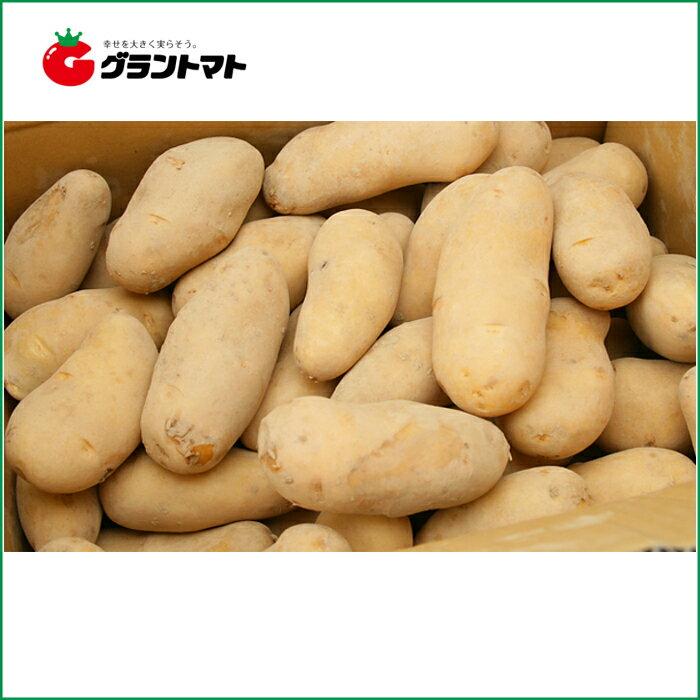 北海道産 じゃがいも種子 メークイン 10kg箱【種ばれいしょ検疫合格証票付き】