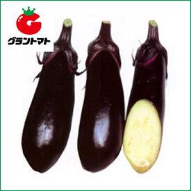 水ナス 美男なす 20ml(約2000粒) 野菜種子【茄子 ナス】【取寄商品】