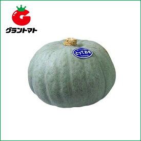 とっておき南瓜 100粒 野菜種子【かぼちゃ カボチャ】【取寄商品】