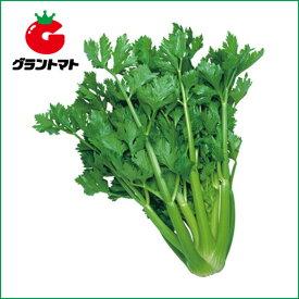 セルリーコーネル セロリ 20ml 野菜種子【取寄商品】
