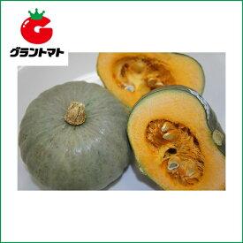 白い坊ちゃん南瓜 100粒 野菜種子【かぼちゃ カボチャ】【取寄商品】