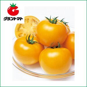 桃太郎ゴールド トマト 1000粒 野菜種子【とまと】【取寄商品】