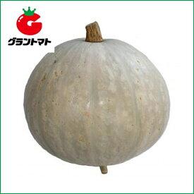 伯爵南瓜 100粒 野菜種子【かぼちゃ カボチャ】【取寄商品】