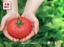【夢とまと】フルーツトマト1.2kg箱(出荷時期1月〜5月頃)