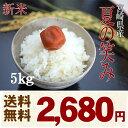 【新米】 夏の笑み お米 5Kg(白米 5Kg×1) 平成29年宮崎県産(産地直送)