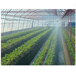 住化農業資材 ミストエース Sナイアガラ63 120m巻 (サイド灌水) 潅水チューブ 灌水チューブ