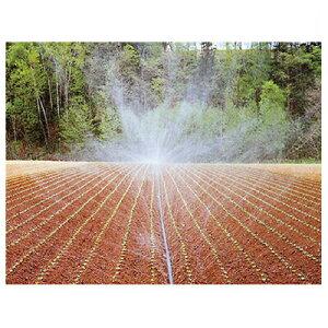 住化農業資材 スミレイン 50 100m巻 潅水チューブ 灌水チューブ