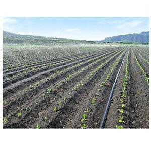 住化農業資材 スミサンスイ R露地ワイド 110m巻 ~10m 潅水チューブ 灌水チューブ