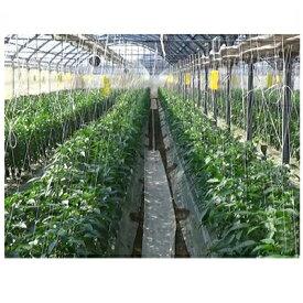 住化農業資材 スミチューブ 06−60 200m巻 0.6mmφ大孔 6千鳥 潅水チューブ 灌水チューブ