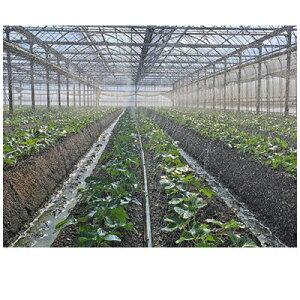 住化農業資材 スミチューブウエシタ小水量 200m巻 上孔8千鳥 下孔12千鳥 潅水チューブ 灌水チューブ