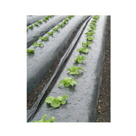 岩谷 イワタニ 菜園用 メタリック黒マルチ 0.02mm×95cm×50m 農業資材 園芸用品 家庭菜園